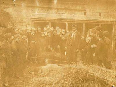 15 novembre 1903 - Magnus tuant le cochon